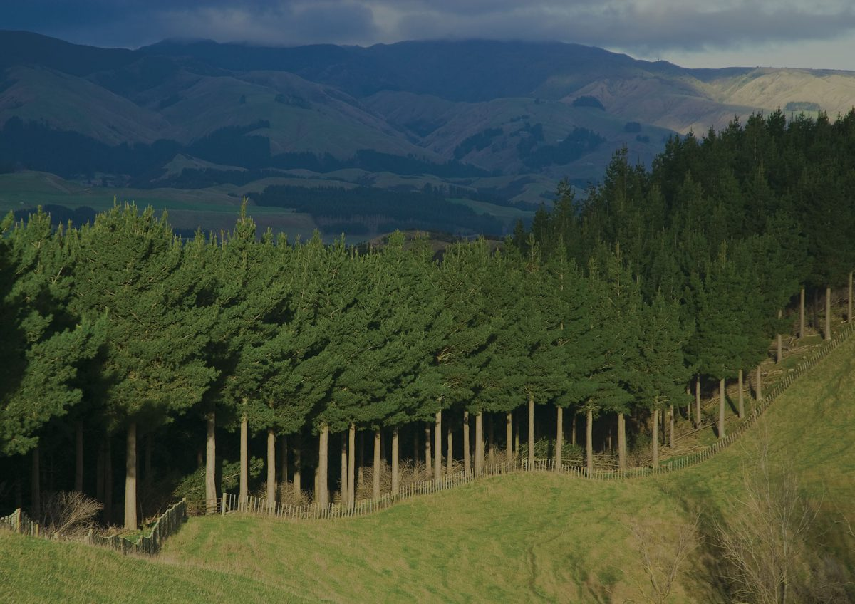 forest-green, Forest & Harvesting Managers, 2 Dowling Street, Dunedin 9016